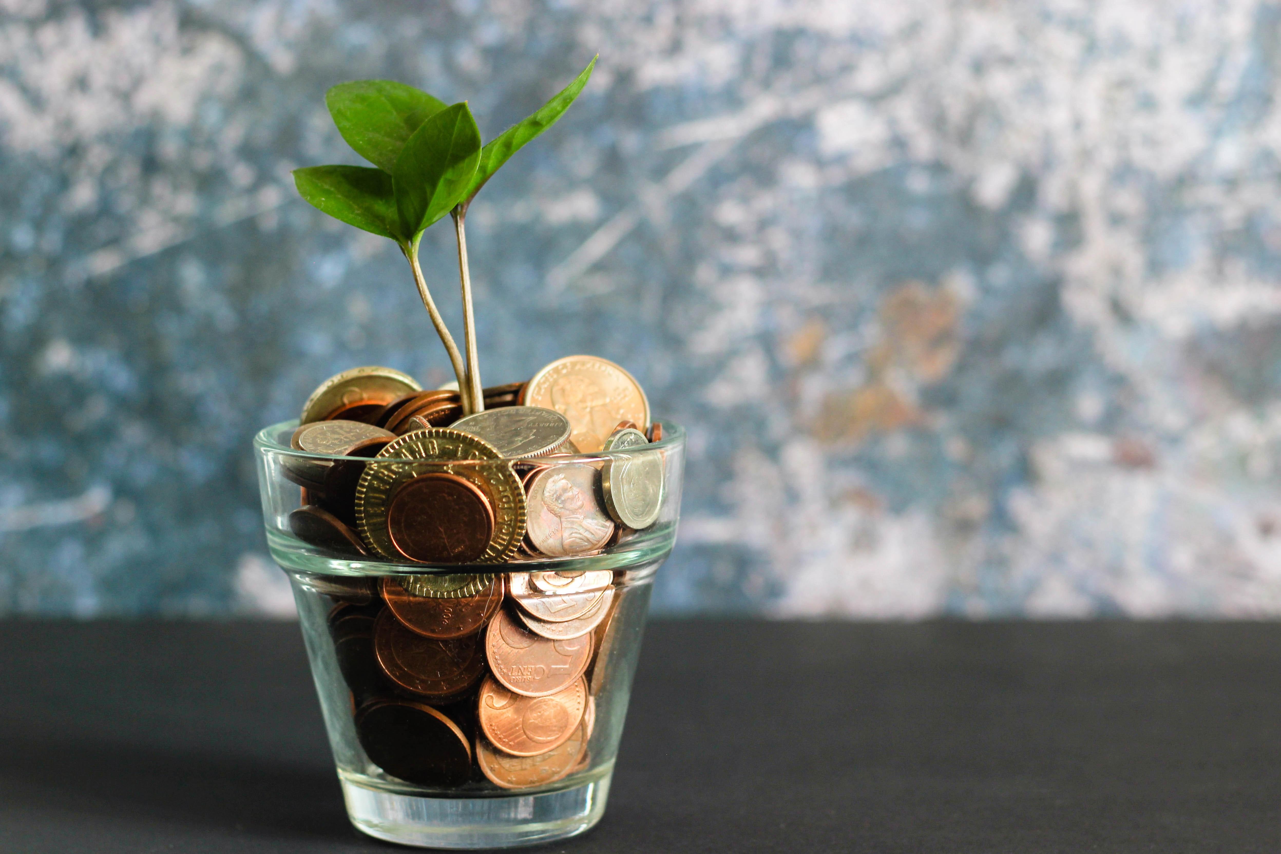 植物とコイン
